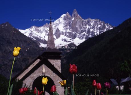 チューリップと雪山の写真素材 [FYI00035054]