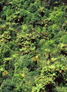 シダ類が群生する山の写真素材 [FYI00035218]