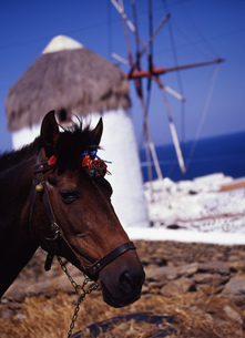 馬と風車の写真素材 [FYI00035430]