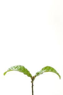 木の芽の写真素材 [FYI00036756]