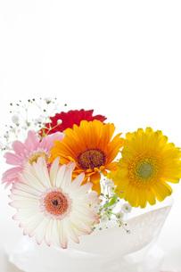 花の素材 [FYI00036763]