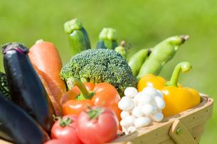 野菜の写真素材 [FYI00036861]
