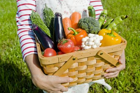 野菜の写真素材 [FYI00036865]