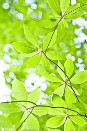 新緑の素材 [FYI00036874]