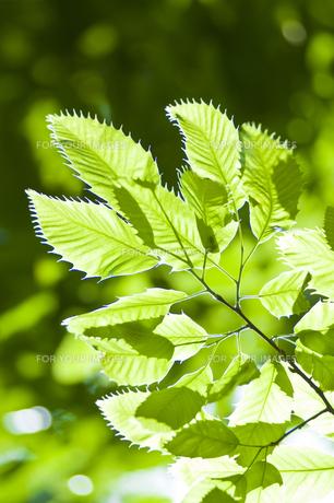 新緑の写真素材 [FYI00036880]