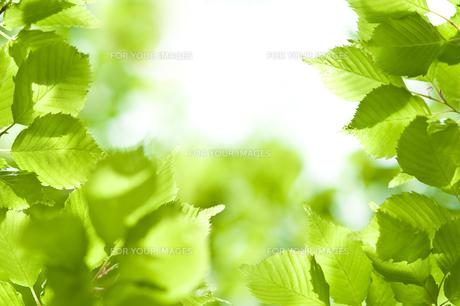 新緑の素材 [FYI00036885]