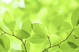 新緑の素材 [FYI00036892]