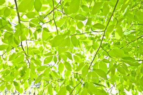 新緑の素材 [FYI00036895]