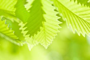 新緑の素材 [FYI00036900]