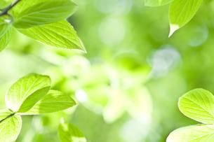 新緑の素材 [FYI00036903]