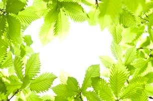新緑の素材 [FYI00036906]