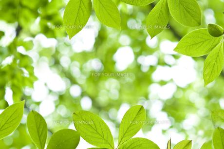 新緑の素材 [FYI00036908]