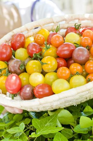 トマトの写真素材 [FYI00036924]