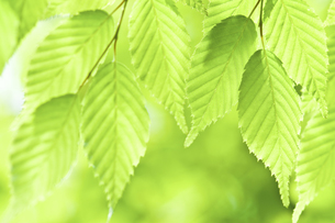 新緑の素材 [FYI00036929]