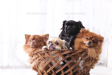 犬の写真素材 [FYI00037306]
