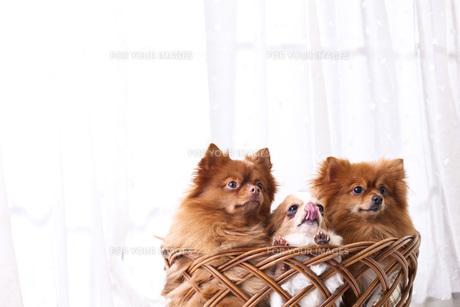犬の写真素材 [FYI00037308]