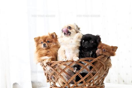 犬の写真素材 [FYI00037309]