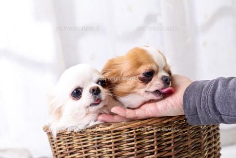 犬の写真素材 [FYI00037315]