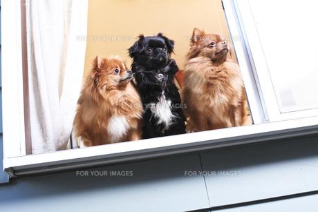 犬の写真素材 [FYI00037317]