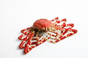 蟹の写真素材 [FYI00037327]