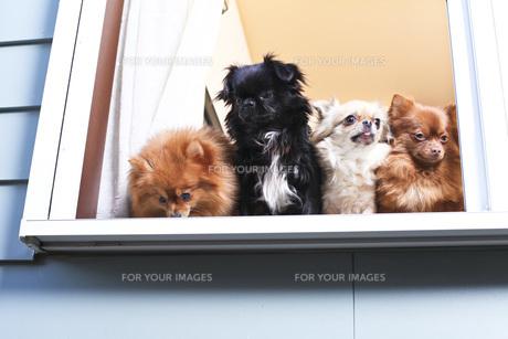 犬の写真素材 [FYI00037329]