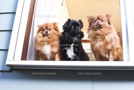 犬の写真素材 [FYI00037330]