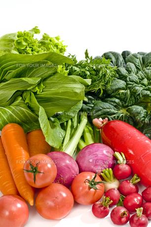 野菜の写真素材 [FYI00037407]