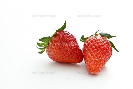 苺の写真素材 [FYI00037561]