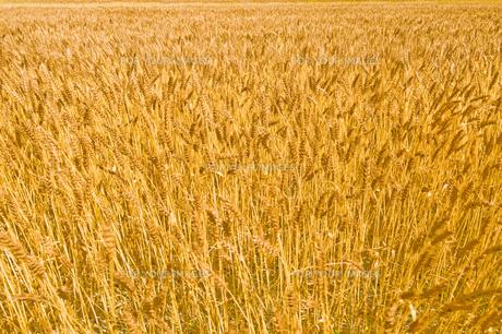 →畑の素材 [FYI00037647]