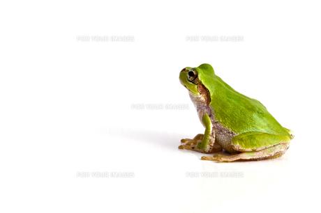 蛙の写真素材 [FYI00037785]