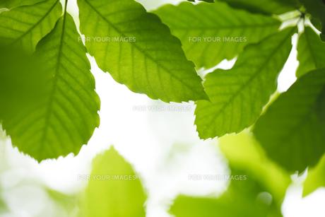 新緑の素材 [FYI00038014]