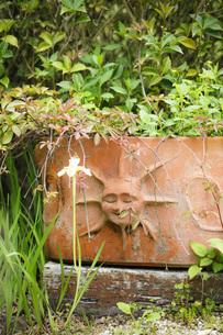 ガーデンの写真素材 [FYI00038017]