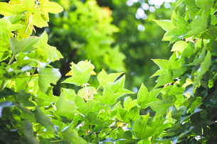 新緑の素材 [FYI00038018]