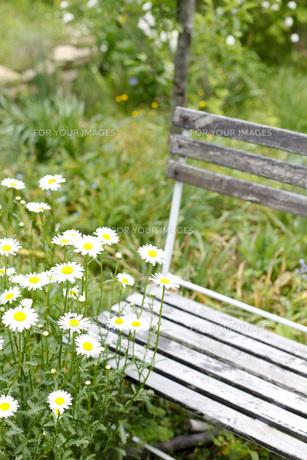 ガーデンの写真素材 [FYI00038023]