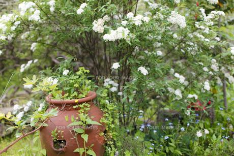 ガーデンの写真素材 [FYI00038026]