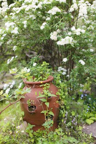 ガーデンの写真素材 [FYI00038027]