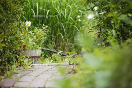 ガーデンの写真素材 [FYI00038028]