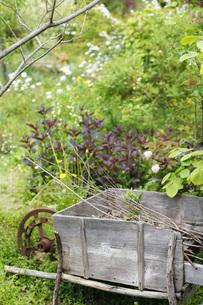 ガーデンの写真素材 [FYI00038029]