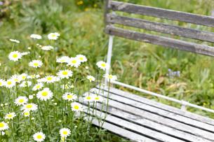 ガーデンの写真素材 [FYI00038031]