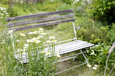 ガーデンの写真素材 [FYI00038032]