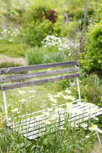 ガーデンの写真素材 [FYI00038034]