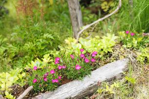 ガーデンの写真素材 [FYI00038037]