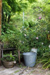 ガーデンの写真素材 [FYI00038038]