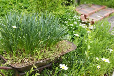ガーデンの写真素材 [FYI00038049]