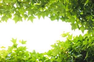 新緑の素材 [FYI00038052]