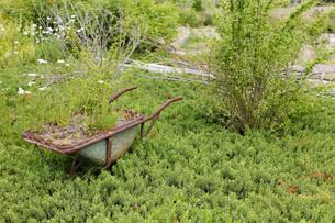 ガーデンの写真素材 [FYI00038066]