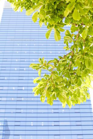 新緑の写真素材 [FYI00038082]