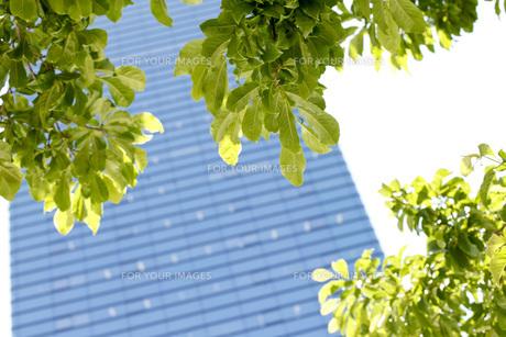 新緑の写真素材 [FYI00038084]