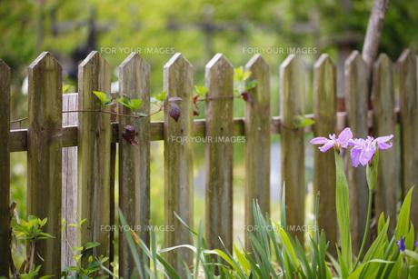 ガーデンの写真素材 [FYI00038085]