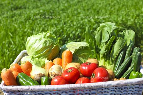 野菜の素材 [FYI00038087]